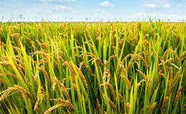 農產品B2B2C